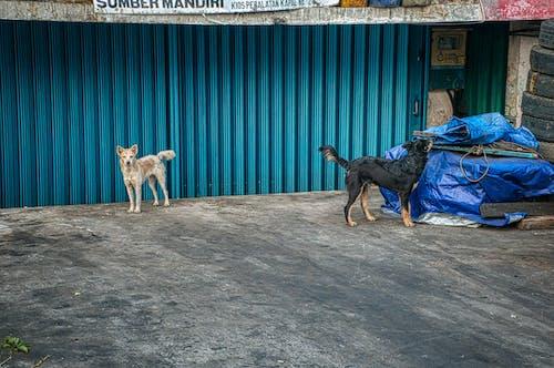 Foto stok gratis anjing, bangunan, barang tak berguna