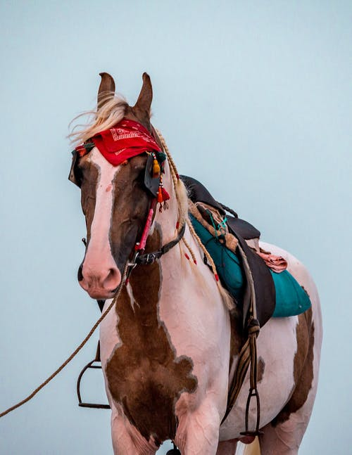 Pinto horse equipped with blue saddle and leather bridle with red bandana on head standing against light blue sky