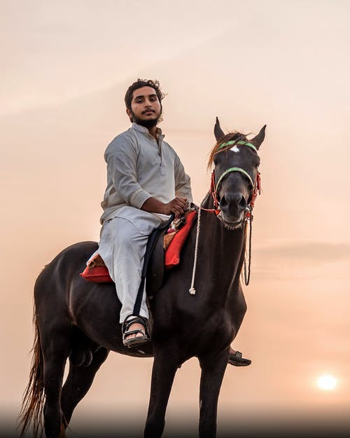 Male equestrian riding dark brown horse against sunset