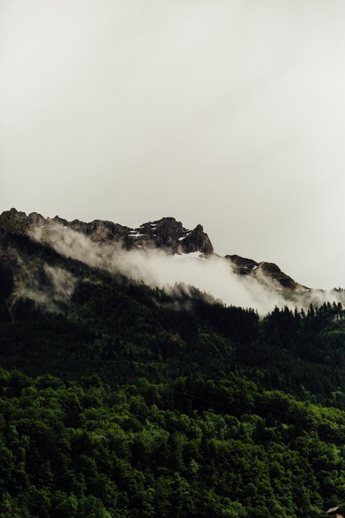 Mountain ridge with green forest in clouds