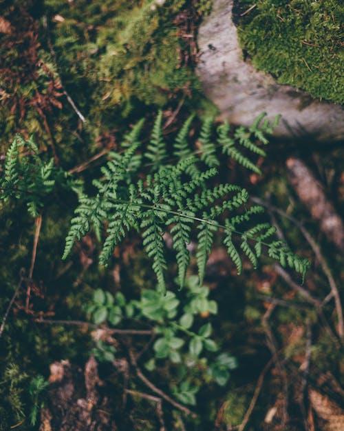 Green fern growing in summer forest