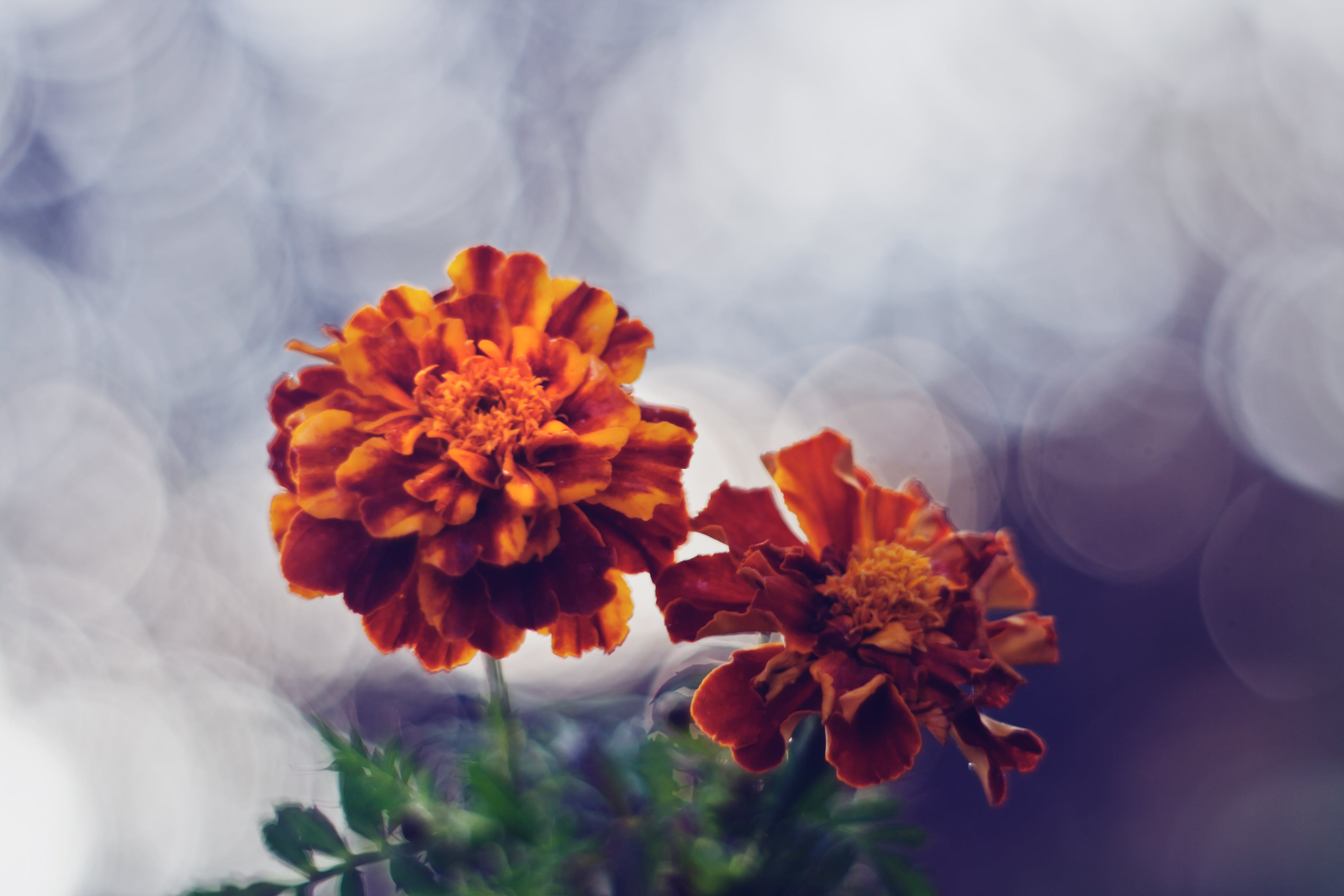 Flowers with bokeh