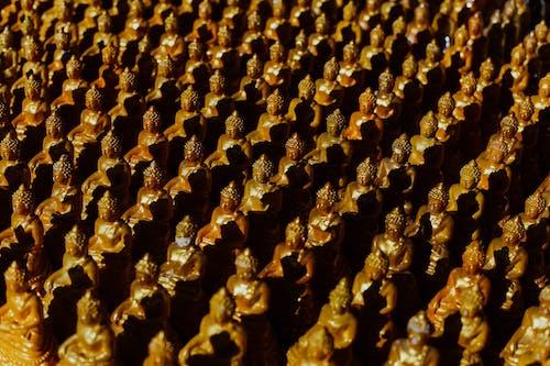 Základová fotografie zdarma na téma abstraktní, Asie, bezobratlí