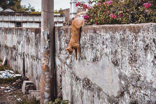 Free stock photo of animal, cat, cats, creature