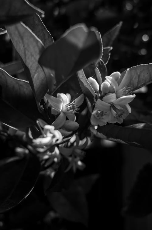 Flowering Plant in Grayscale Photography
