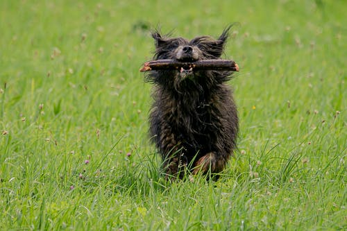Black Long Coat Small Dog on Green Grass Field
