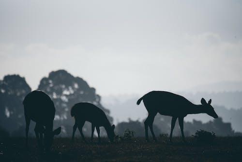 Kostnadsfri bild av däggdjur, dimma, djur