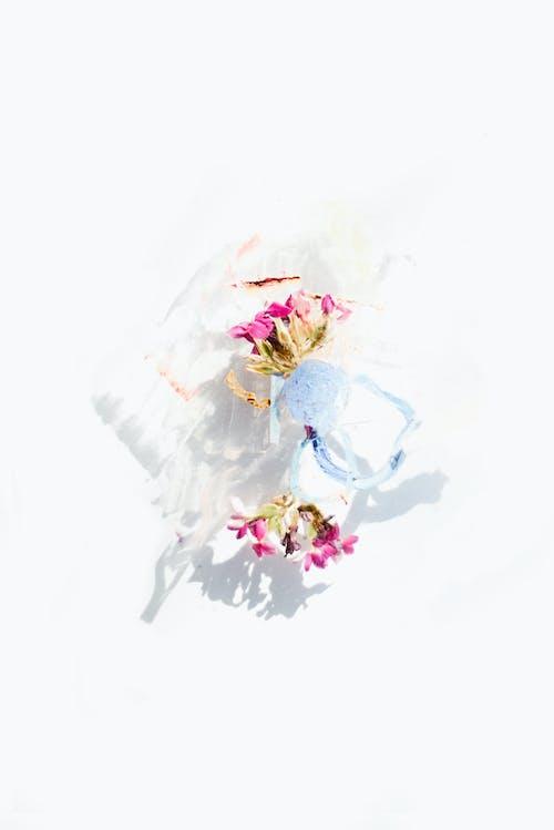Kostnadsfri bild av abstrakt, blad, blomma