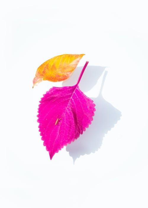 Kostnadsfri bild av blad, blomma, bröllop