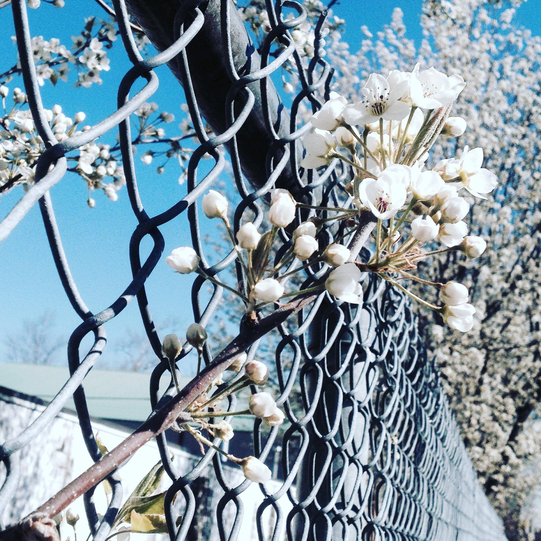 Ảnh lưu trữ miễn phí về cận cảnh, cánh hoa, hàng rào, hàng rào dây xích