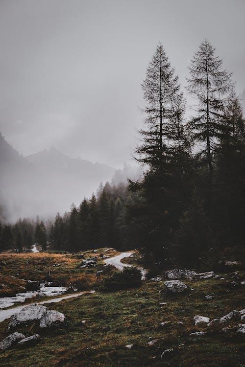 Зеленые сосны возле горы