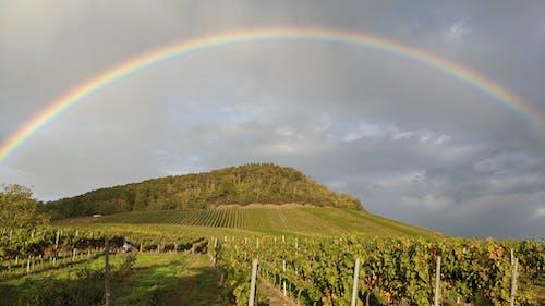 Farmland Under A Gray Sky With Rainbow
