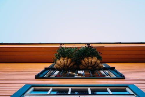 Kostenloses Stock Foto zu architektur, baum, boot, dach