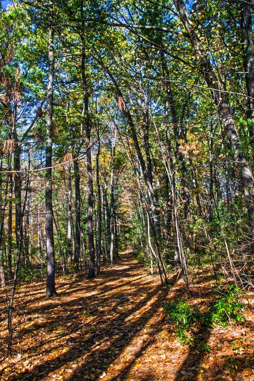 Free stock photo of autumn, fall foliage, forest