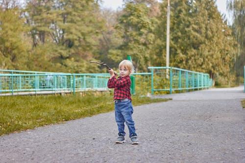 Immagine gratuita di adorabile, albero, atmosfera de outono, autunno
