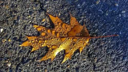 Free stock photo of autumn leaf, leaf, nature