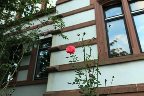 Free stock photo of flower, glass windows, Heidelberg, red flower