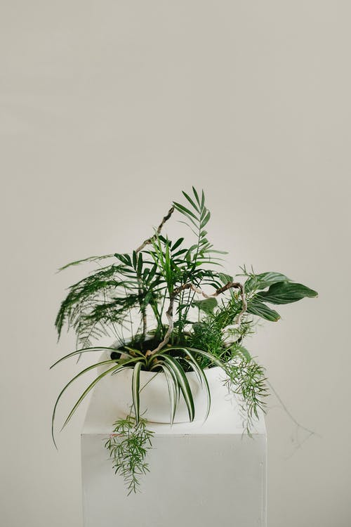 Green potted plant on white shelf