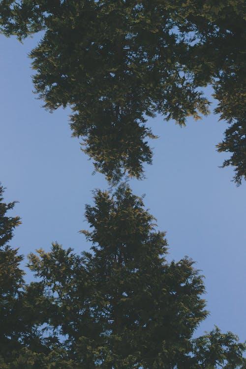 4k 바탕화면, 4k 배경화면, 4k 월페이퍼의 무료 스톡 사진