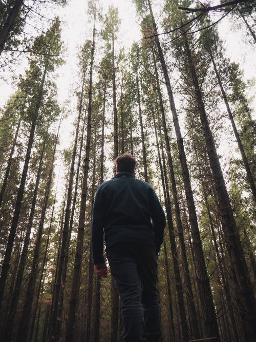 Man Standing in the Middle of Forest