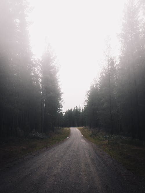 Road Between Green Trees during Foggy Day