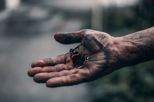 Black and Red Butterfly on Persons Hand