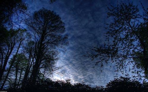 Darmowe zdjęcie z galerii z błękitne niebo, drzewo, fotografia