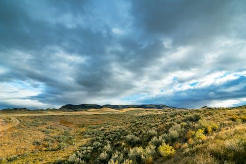 açık hava, arazi, Barış içeren Ücretsiz stok fotoğraf