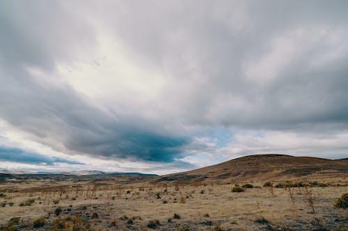 açık hava, arazi, bitki içeren Ücretsiz stok fotoğraf