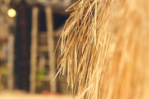 Free stock photo of bali, straw