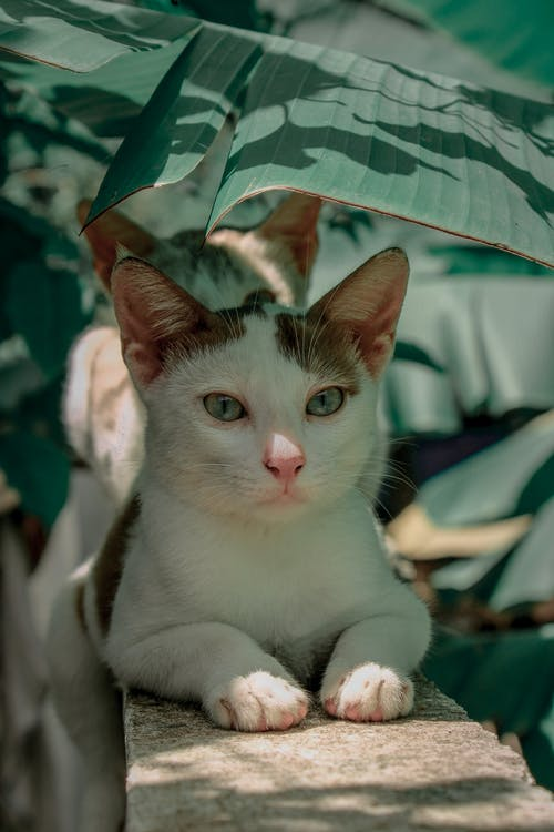 White and Brown Cat Lying On Concrete Under A Leaf