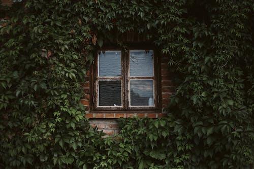 住宅, 原本, 圖案 的 免費圖庫相片