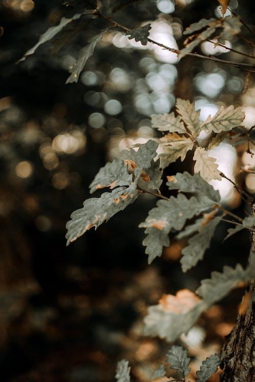 上色, 下落, 乾的, 冬季 的 免费素材图片