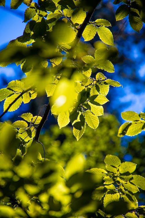 Green Leaves Under Blue Sky