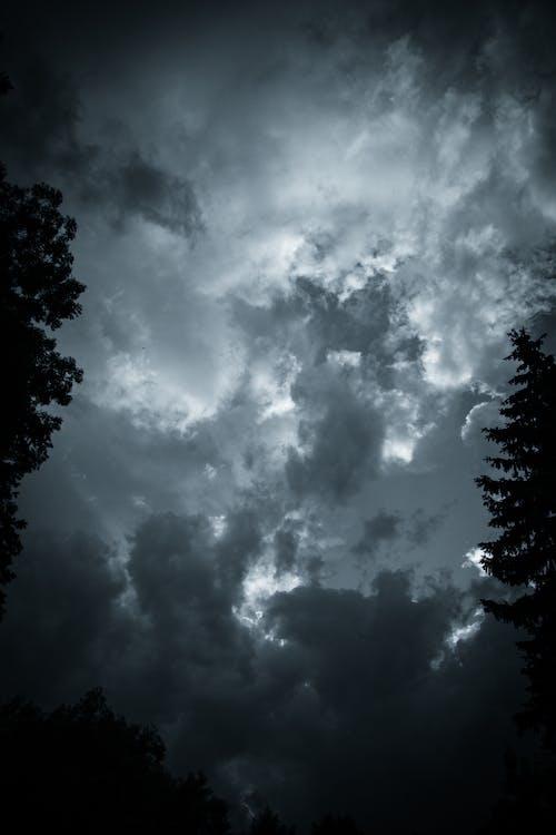 Green Trees Under Dark Clouds