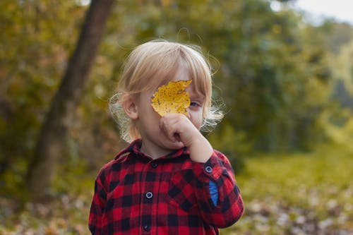 atmosfera de outono, Copyspace, pasion, 亂放電 的 免費圖庫相片