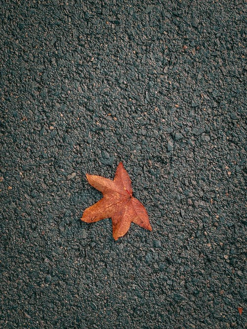 Autumn leaf placed on asphalt