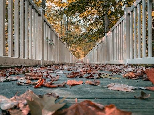 Photos gratuites de arbre, automne, barrière