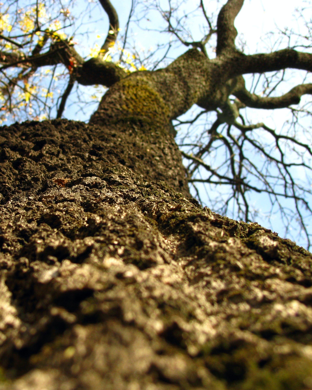 alam, batang pohon, cabang