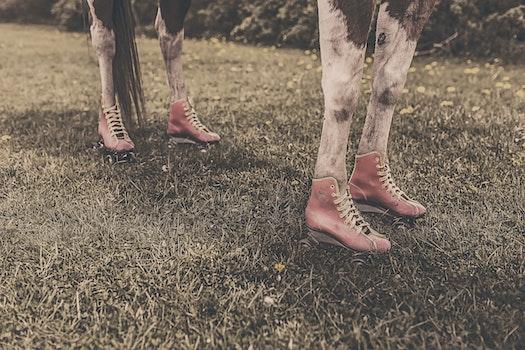 Free stock photo of feet, legs, animal, farm