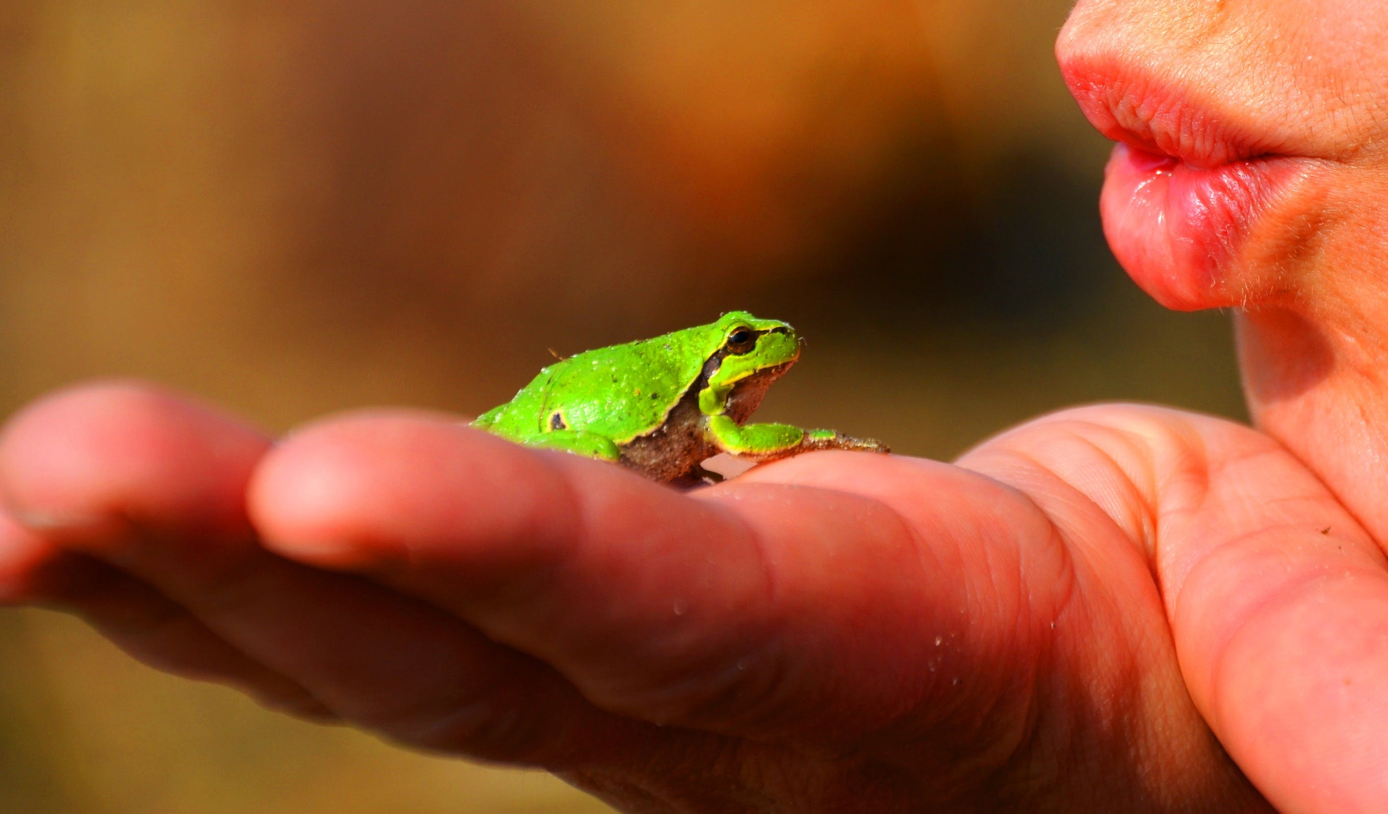 Green Frog on Top of Human Left Hand