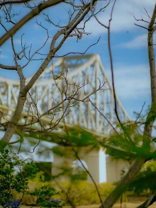 Foto stok gratis alam, australia, brisbane