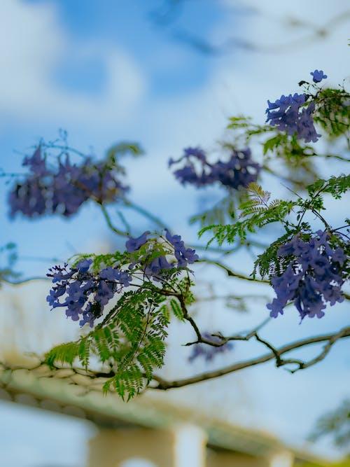 Foto stok gratis alam, alam yang indah, bunga