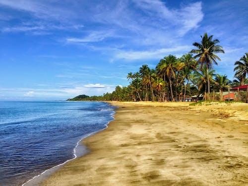 Photos gratuites de arbres, bord de mer, ciel, côte