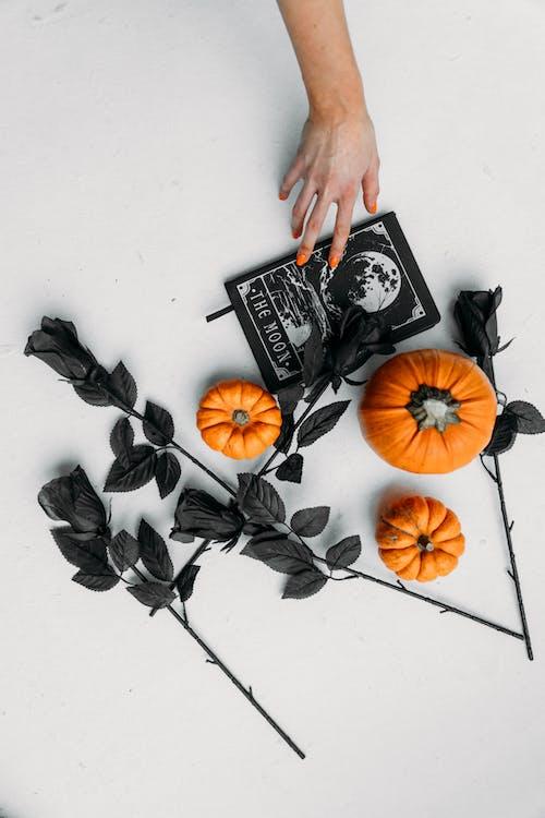 Vrouwelijke Hand Die Op Een Boek Met Pompoenen En Zwarte Rozen Op De Vloer Te Bereiken