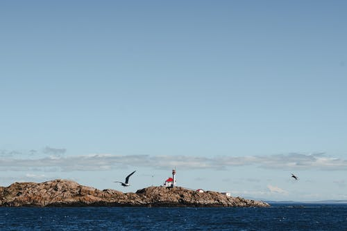 Gulls soaring above rippling water of blue sea with rocky shore in daytime
