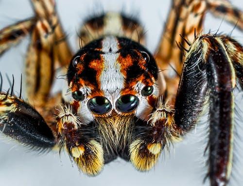 動物, 特寫, 節肢動物, 蜘蛛 的 免费素材照片