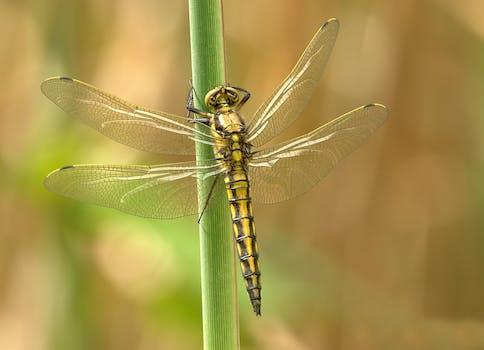 100 amazing dragonfly photos pexels free stock photos