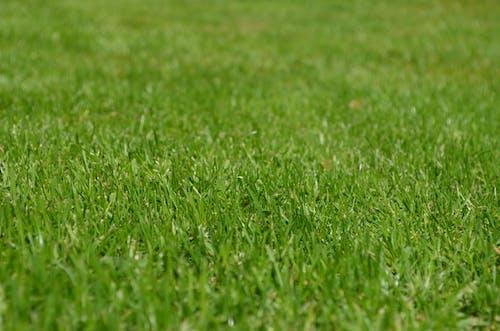 Foto profissional grátis de ecológico, grama, gramado, planta
