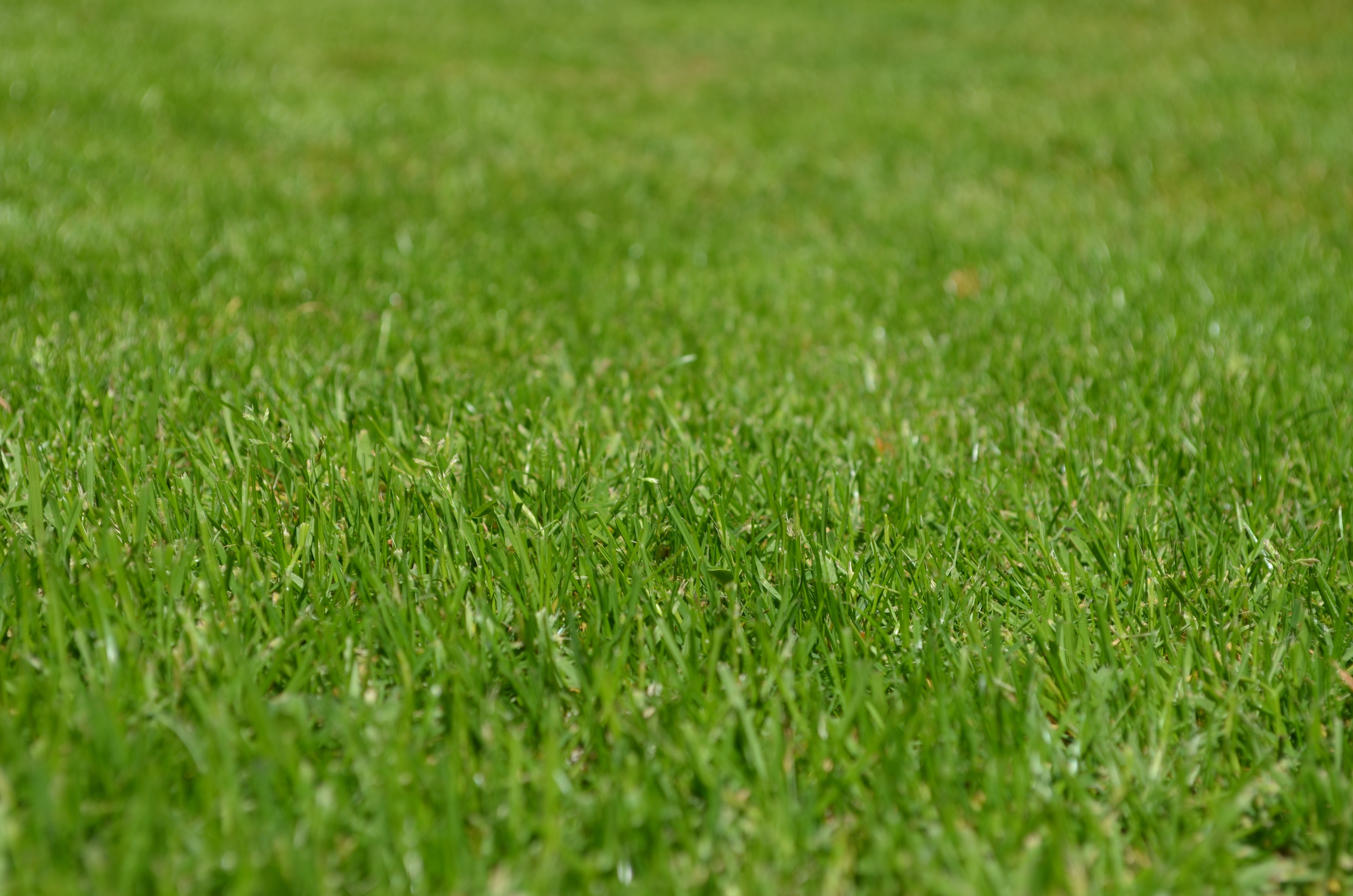 Green Grass · Free Stock Photo